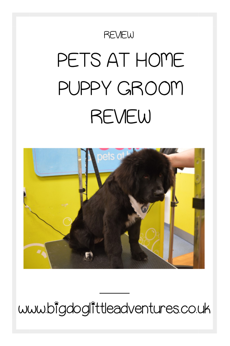 If you have a puppy under 6 months Pets at Home offer a full puppy groom for just £20 not only is it great value for money but it gets your puppy used to grooming.