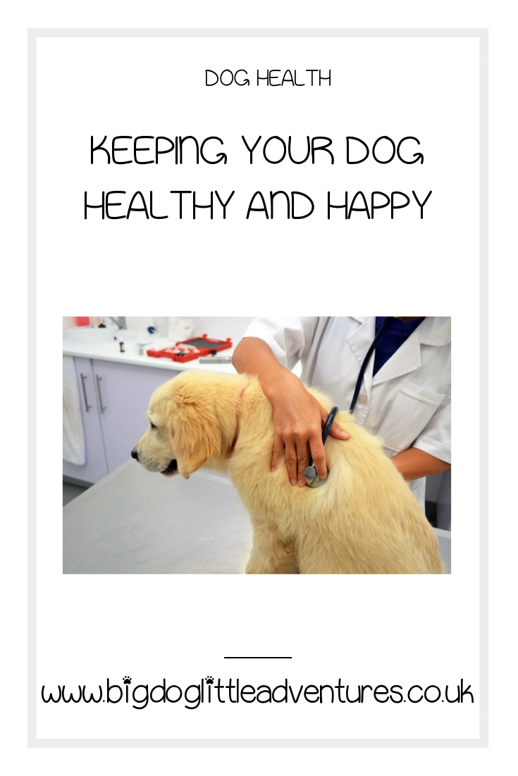 Taking care of a dog is such a huge responsibility, click through to find out some top tips for keeping your dog happy and healthy.