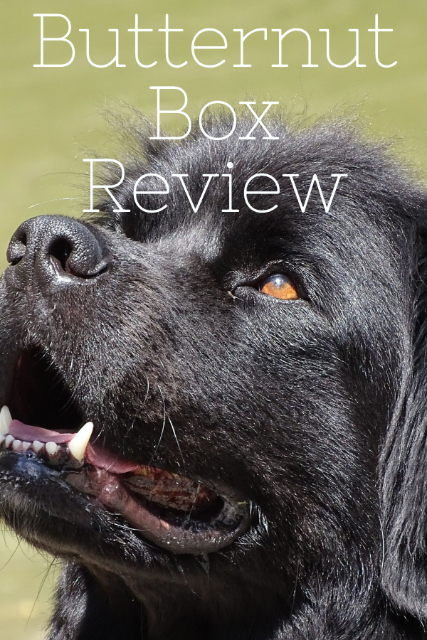 Looking for an alternative food for your dog, check out what we thought of Butternut Box, like having sunday dinner every day!