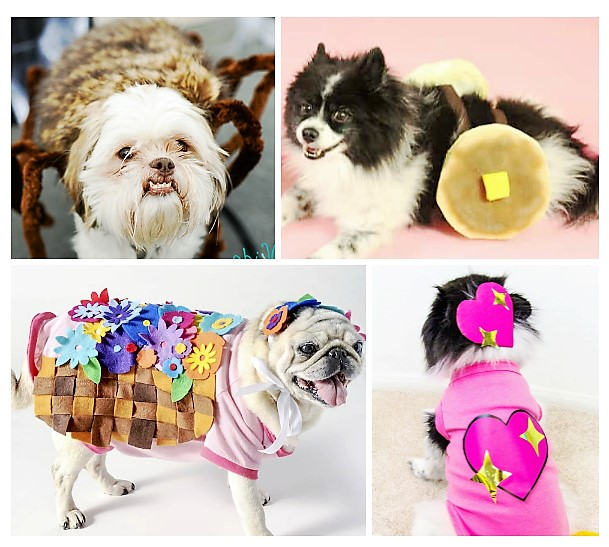 20 DIY Halloween Costumes For Dogs