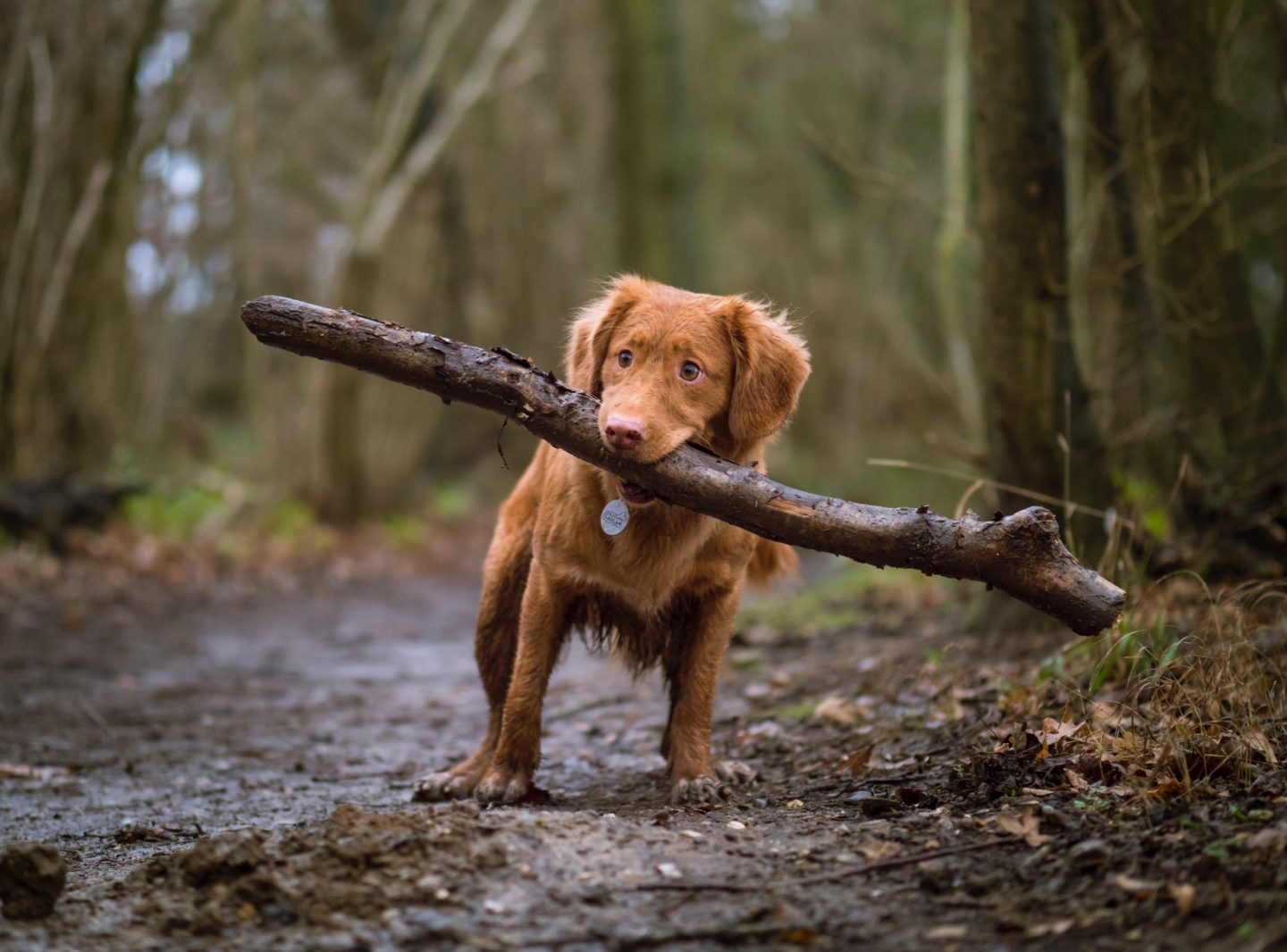 15 Things To Do With Your Dog This Winter