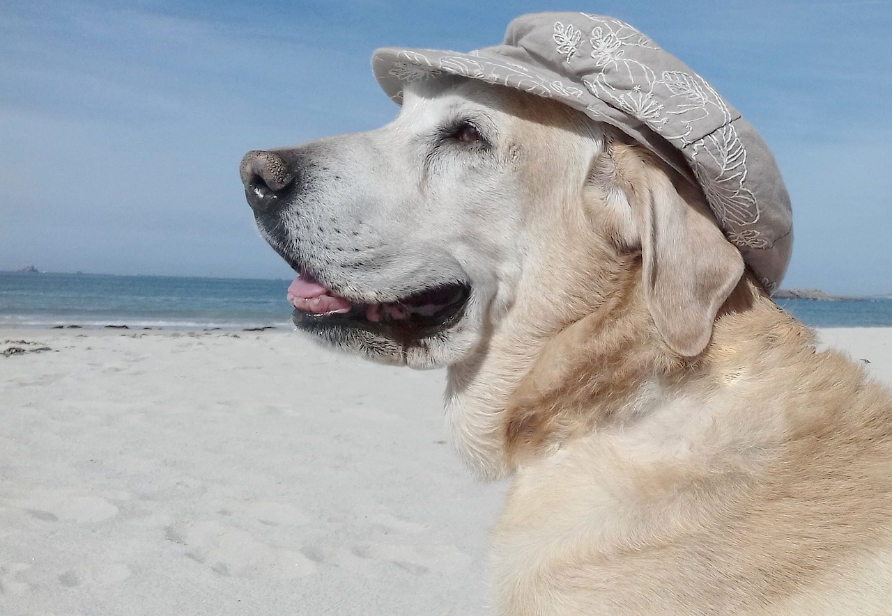 Taking Your Dog Along for a Trip dog on the beach wearing a sunhat