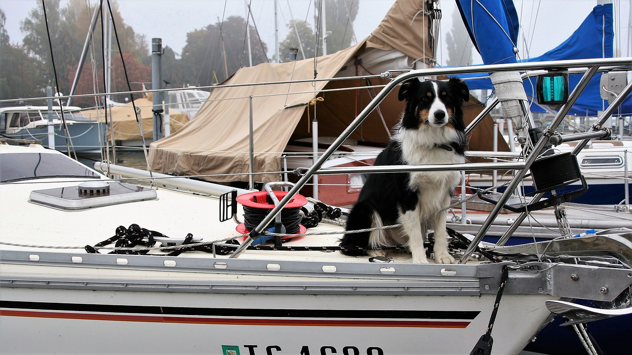 Taking Your Dog Along for a Trip Dog on a boat