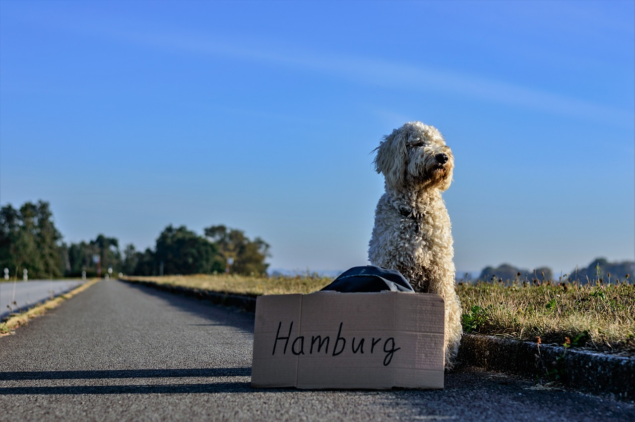 Taking Your Dog Along for a Trip dog hitch hiking to Hamburg