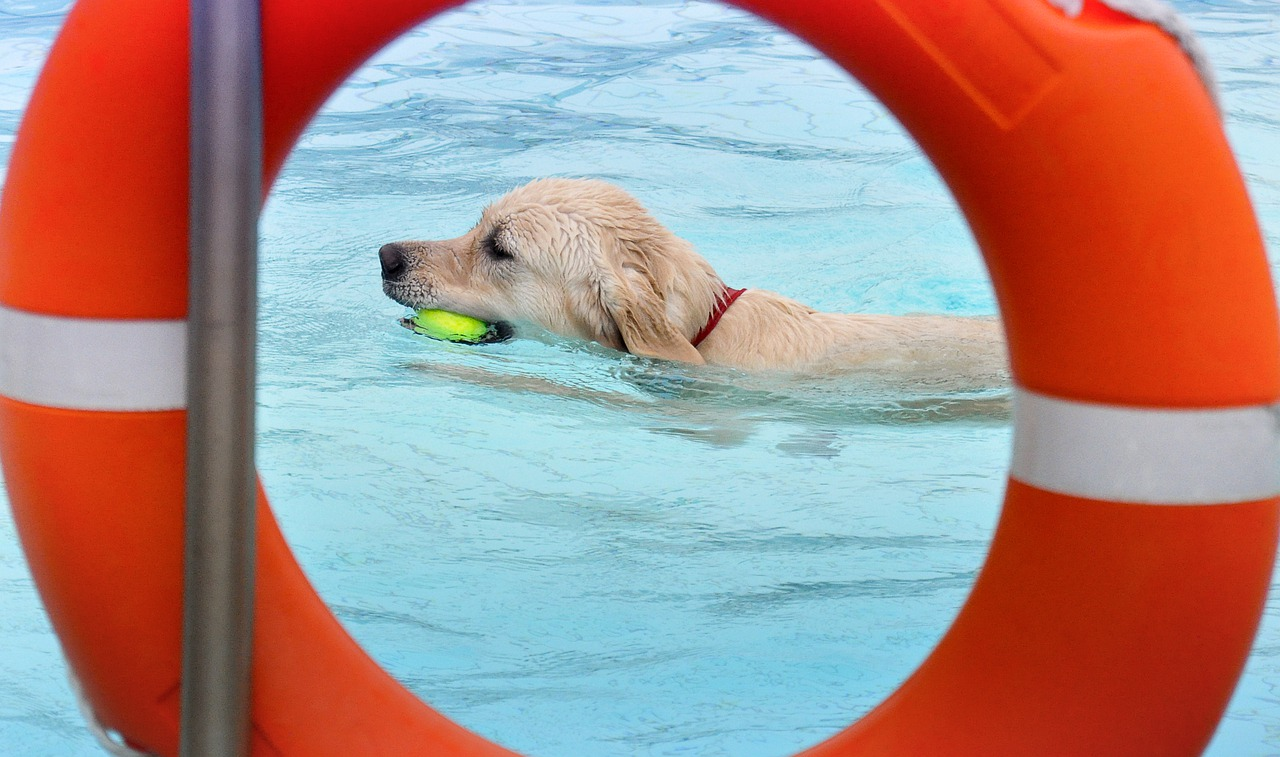 swimming pools for dogs